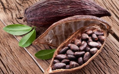 Kakaobohnen in Schale